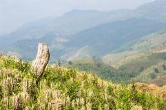 domowy halny Thailand pokrywać strzechą dolinę Fotografia Royalty Free