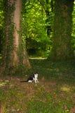 Domowy kot bada las obrazy royalty free