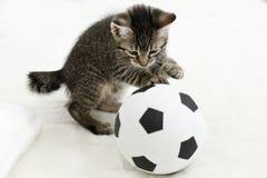 Domowy kot, figlarka bawić się z piłki nożnej piłką Obraz Royalty Free