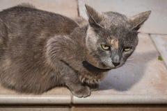 Domowy kot kłaść na ziemi zdjęcie stock