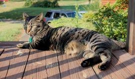 Domowy kot na ganku frontowym Fotografia Royalty Free