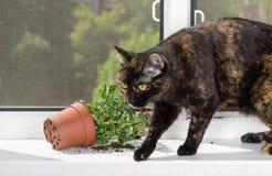 Domowy kot opuszczał kwiatu garnek na windowsill Zdjęcia Royalty Free