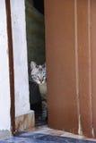 Domowy kot przy dor Obraz Stock