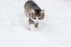 Domowy kot w śniegu Obraz Stock