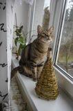 Domowy marmurowy kot na windowsill, kontakt wzrokowy, śliczna kiciuni twarz, drewniana choinka zdjęcia stock