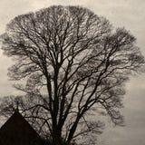 domowy osamotniony dachowy drzewo Obraz Royalty Free