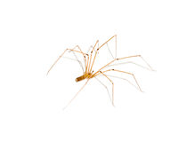 domowy pająk obraz stock