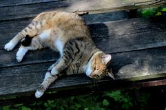 Domowy pasiasty kot odpoczynek na starym stole zdjęcie royalty free