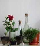 Domowy rośliny pojęcie - kwiaty i rośliny w domu obraz stock