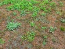 Domowy trawnik przed domem nad bieg crabgrass i świrzepami obraz royalty free