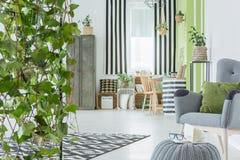 Domowy wnętrze z dekoracyjnym bluszczem zdjęcie royalty free