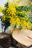 Domowy wystrój, śniadanio-lunch pięknych mimoz żółta wiosna kwitnie w wazie na drewnie Fotografia Stock