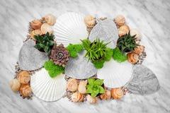 Domowy wystrój z sukulentów seashells i roślinami zdjęcie stock