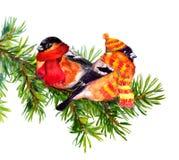 Dompfaff zwei in der Winterkleidung, Hut und Schal, auf Tannenbaum Vektor Abbildung