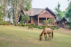 Domu wiejskiego ranek Zdjęcia Royalty Free