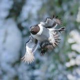 Don& x27 το τ αναστατώνει τα φτερά μου Στοκ Εικόνες