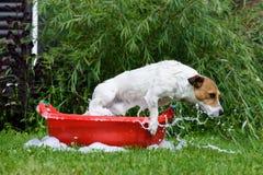 Don& x27 собаки; t хочет помыть скакать от washbowl брызгая пену стоковое изображение rf