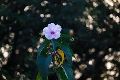 Don& x27 di I; la t crede nel selezionamento dell'ogni fiore che trovo nel legno fotografia stock
