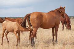 Don horses Royalty Free Stock Images