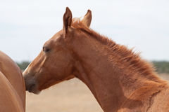 Don horses Stock Photo