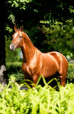 Don red horse portrait in summer. Golden red horse portrait in summer, Don stallion Stock Photo