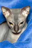 Don sphinx Royalty Free Stock Image