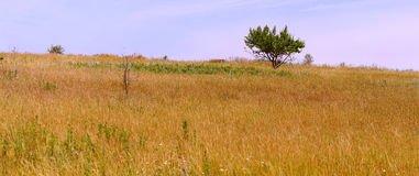 Don Steppe. Steppe at noon in the summer. Rostov region Royalty Free Stock Images