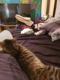 Don& x27; t förtjänar katter arkivfoton