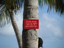 Don't Feed the Birds. Please do not feed the birds sign on a palm tree Stock Photography