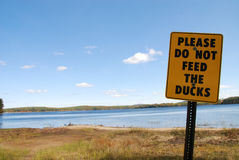 Don't feed the Ducks stock photos
