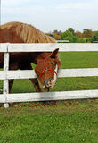 Don't fence me in... Royalty Free Stock Photography