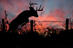 Don't Fence Me In - White Tail Buck stock image