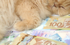Don't let your money sleep Stock Photo