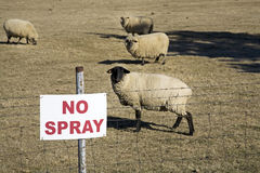 Don't spray sign with sheep Stock Photo