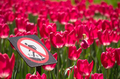 Don't step on the Flowers Please Stock Images