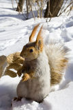 Don't touch me!. (squirrel and man Stock Photography