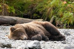 Don't wake me up, I'm digesting salmon stock images