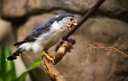 Don't yell at me!. Little hawk yelling at a lady bug Stock Photos