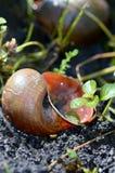 don, zbierania zna moją skorupę ślimaka t, Zdjęcie Stock