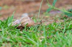don, zbierania zna moją skorupę ślimaka t, Obraz Royalty Free