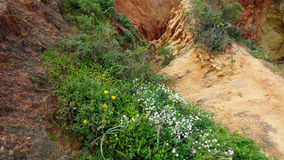 Dona ana. Sand dunes with wild growing green plats Stock Photo