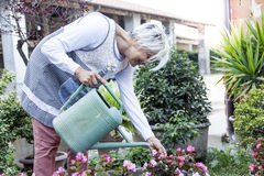 Dona de casa atrativa que molha suas flores com amor imagens de stock royalty free