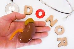 Donación del riñón y de la mano de la foto dispensadora de aceite del concepto La palabra de 3D pone letras al donante con la let Foto de archivo