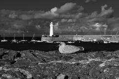 Donaghadee-Leuchtturm lizenzfreie stockfotos