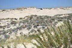 Donana国家公园在安大路西亚,西班牙 免版税库存照片