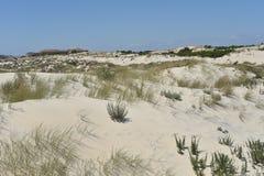 Donana Nationaal Park in Andalusia, Spanje stock foto's