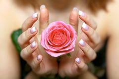 Donante de una rosa. Mano de la mujer Fotografía de archivo libre de regalías
