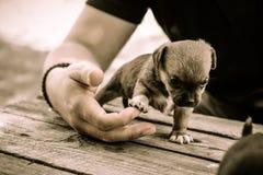 Donante del perrito highfive a la mano humana Foto de archivo libre de regalías
