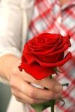 Donare una rosa Fotografie Stock Libere da Diritti