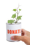 Donation Box and Green Plant Royalty Free Stock Images